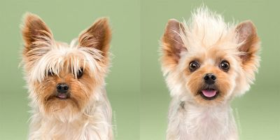 Adorable Portraits of Dogs Before and After Their Haircut