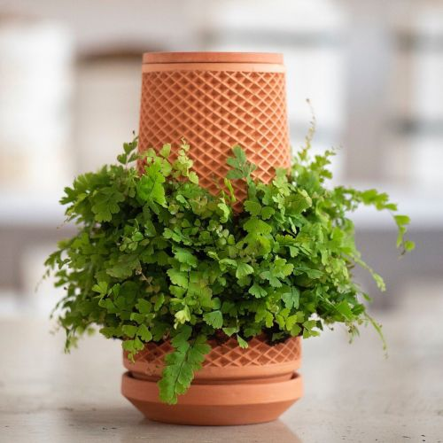 A New Hydroponic Planter Imprints Houseplants with Tessellating Root Systems