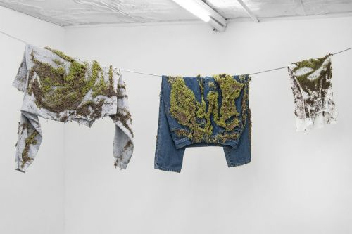 Living Chia Germinates from Clothing Abandoned on a Wash Line by Artist Bea Fremderman