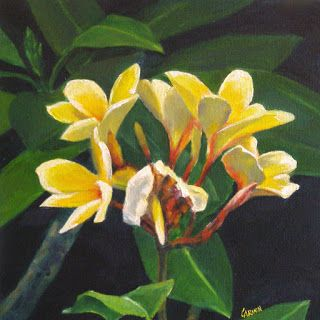 Yellow Plumeria, 10x10 Print on Canvas, from Original Oil painting