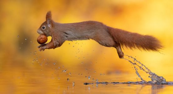 Photographer Captures Squirrel Flying Over Water with a Nut