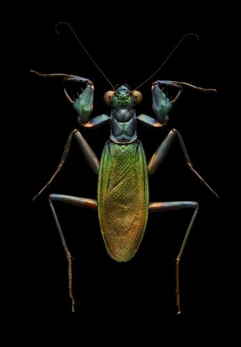 Microsculpture: Macro Photographs of Iridescent Insects Composed of 10,000 Images by Levon Biss
