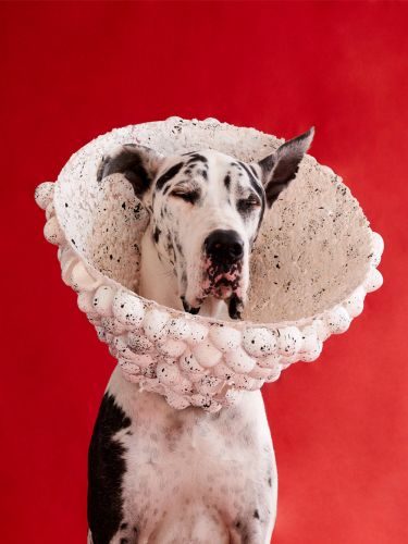 Photographer Winnie Au Captures the Unique Personalities of Dogs Adorned in Sculptural 'Cones of Shame'