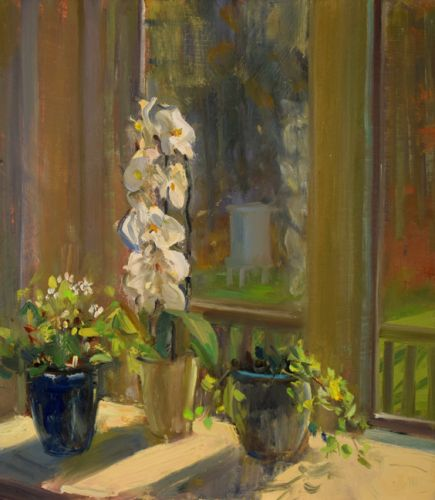 Orchids in the Sun