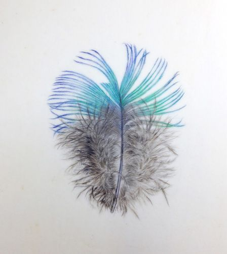 Thirty Day Vellum Challenge Concludes.feathers, bugs and a few old favourites
