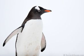 Antarctica Photographic Expedition