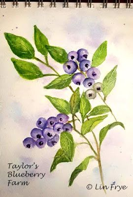 Journal - Blueberries - Taylor's Blueberry Farm
