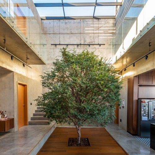 Nature Within: 17 Projects With Indoor Trees