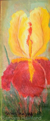 Yellow and Red Iris, oils canvas, Barbara Haviland,Texas Floral Artist