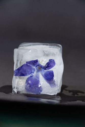 Ice Flowers: A Fun At-Home Project for Beautiful Still Life Photos
