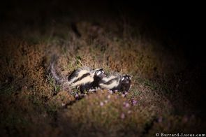 Photographing Wildlife at Night in Liuwa Plain