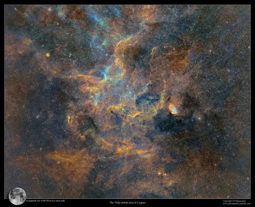 An Enormous Mosaic Spanning 1,250 Hours of Exposure Time Captures the Milky Way in Incredible Detail