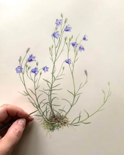 British Wildflowers Exhibition: Easton Walled Gardens 2020