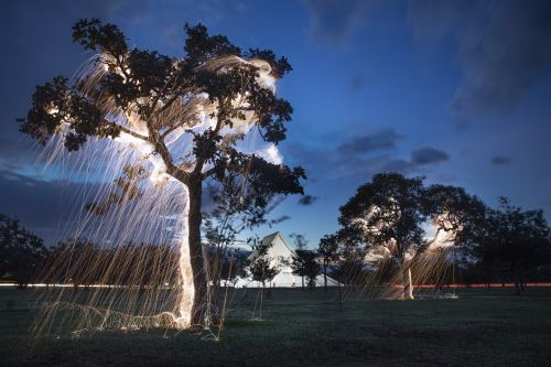 Illuminated Streaks Appear to Fall from Trees in Light Paintings by Photographer Vitor Schietti