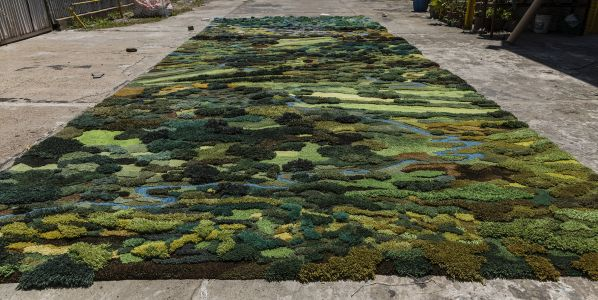 Lush Tufted Tapestries Document Ecological Changes in Argentina's Landscapes