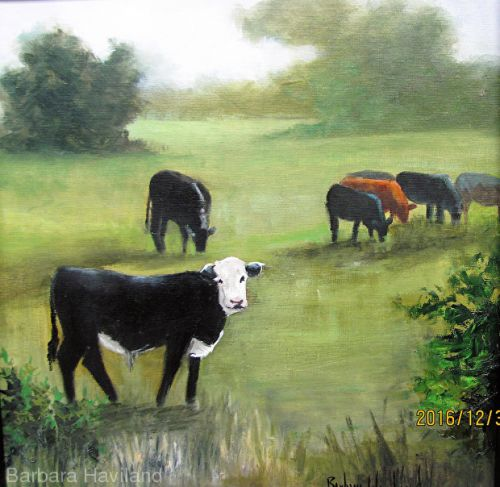 Pasture of Cows,oils canvas,wildlife,Barbara Haviland