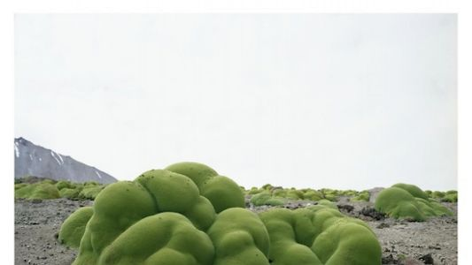 The Oldest Living Things On Earth: A Conversation with Photographer Rachel Sussman