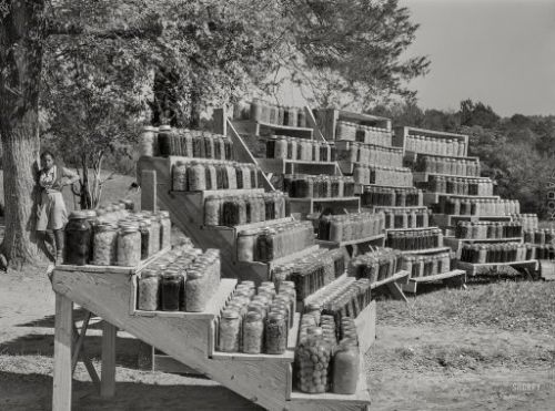 Cannery Rows: 1941