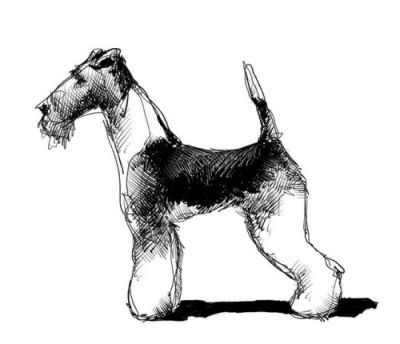 Like Tintin's Milou but not white. foxterrier dog